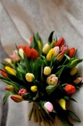 Bukiet Mieszanych Tulipanów